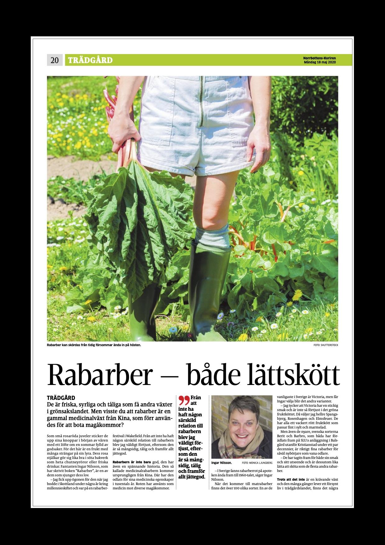 Rabarber – en delikat medicinalväxt